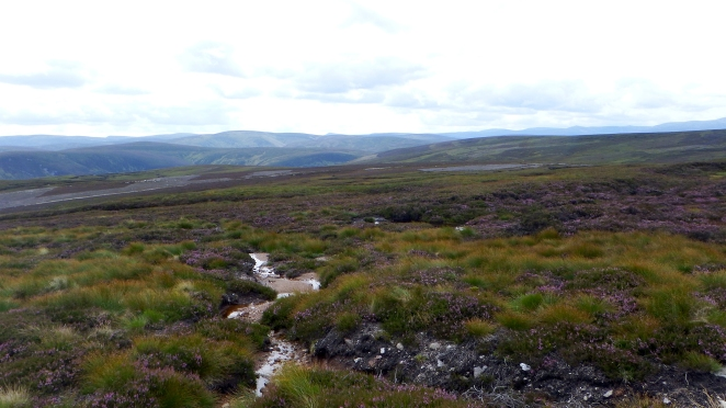 Mount Keen Stravaiging Fungle road Wild Ride 10