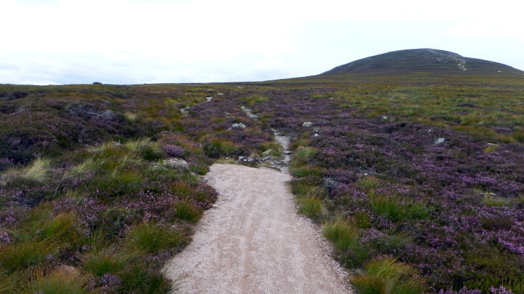 Mount Keen Stravaiging Fungle road Wild Ride 11