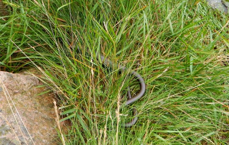Mount Keen Stravaiging Fungle road Wild Ride adder