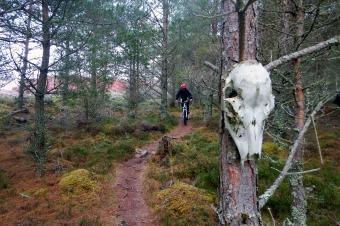 High Burnside Deer Skull Scotland Mountain bike Enduro XC DH Trail nature