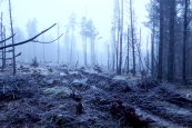 Winter woodland frozen landscape
