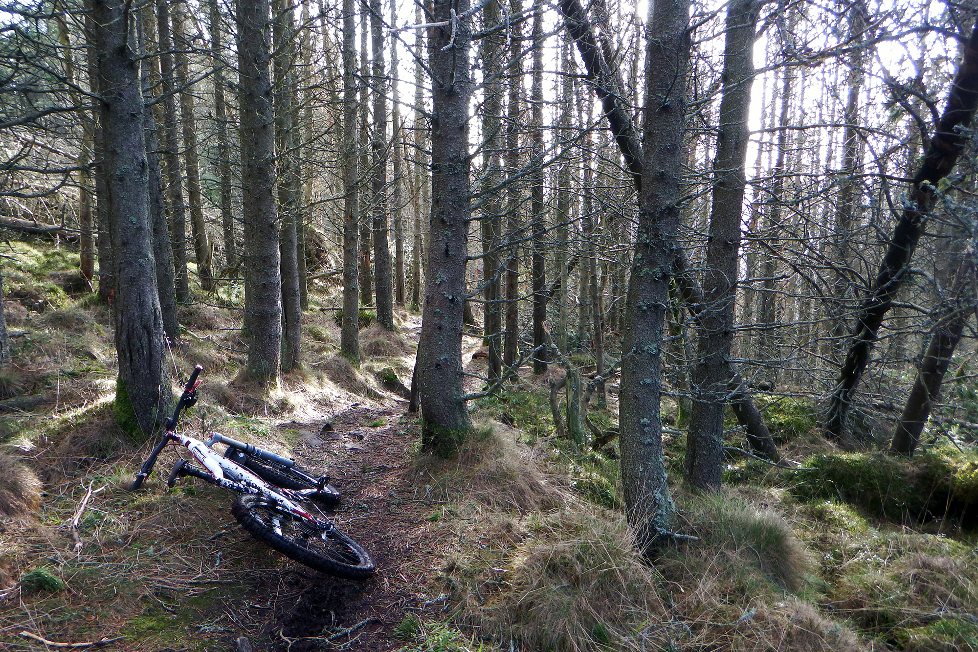 Stravaiging Enduro Scolty February 10