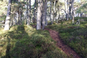 "Hill of Goauch ""XC"" trails"