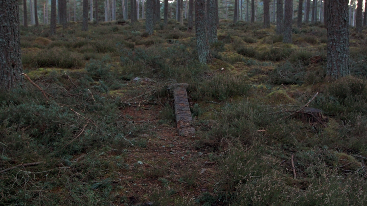Death of a trail stravaiging MTB Scotland