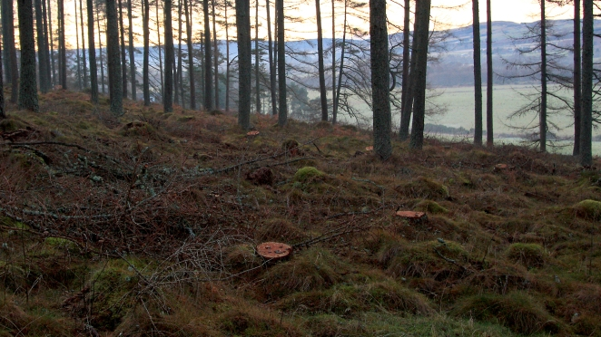 Death of a trail stravaiging scotland land access
